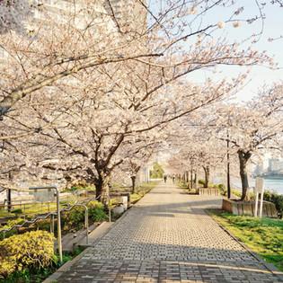 石川島公園.jpg