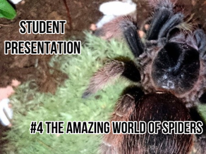 The Amazing World of Spiders [student presentation]