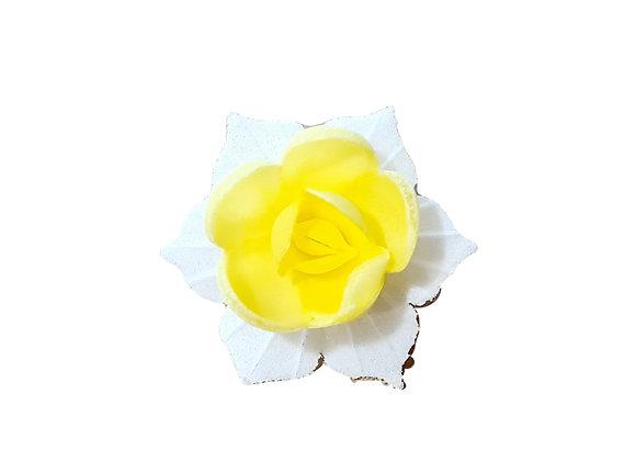 Narcise dzeltena ar baltām lapiņām
