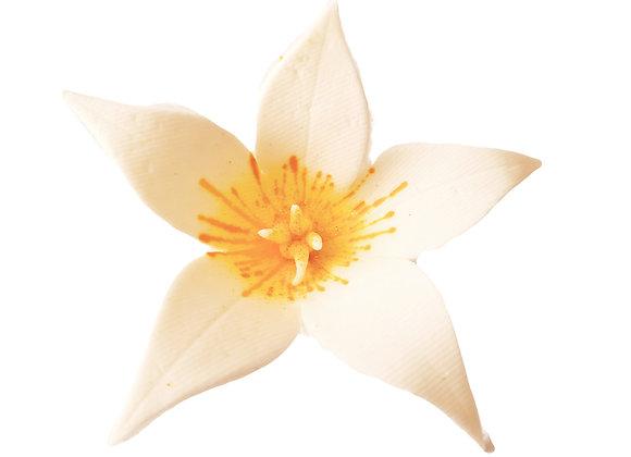 Lielas dzeltenas lilijas