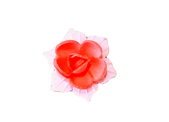 Narcise sārta ar rozā lapiņām