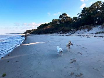 Brian Sham-Eastern Shore beach.jpg