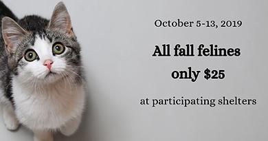 4th Annual Fall Feline Festival