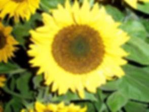 Image 1-18-16 at 6.07 PM (4).jpg