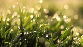 《寄稿記事》WEBメディア レニピ「ベチバーの香りが放つ、あたたかい雨の記憶」