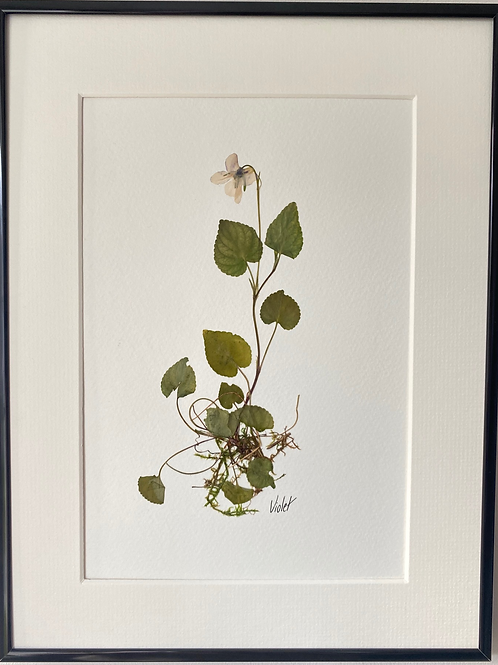 Violet Pressed Flower Botanical Art