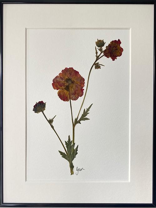 Geum Pressed Flower Botanical Art