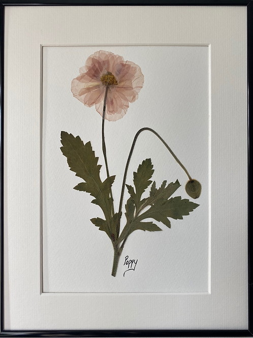 SOLD Poppy Pressed Flower Botanical Art