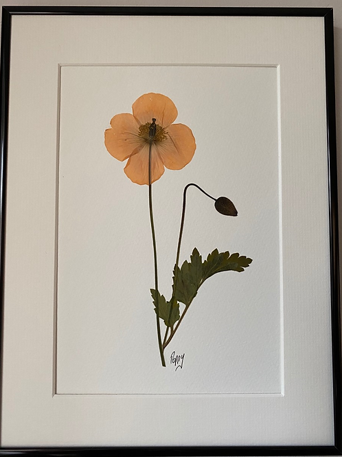 SOLD Yellow Poppy Pressed Flower Botanical Art
