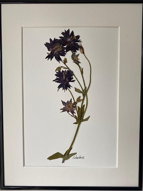 Purple Columbine Pressed Flower Botanical Art