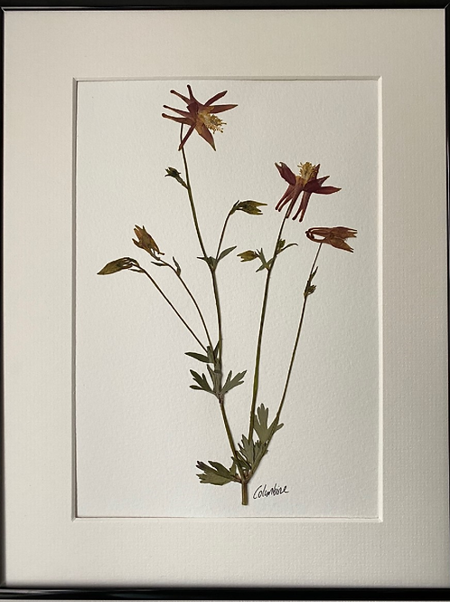 Rust Red Columbine Pressed Flower Botanical Art