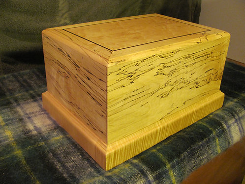 Spalted Curly Maple Cigar Humidor