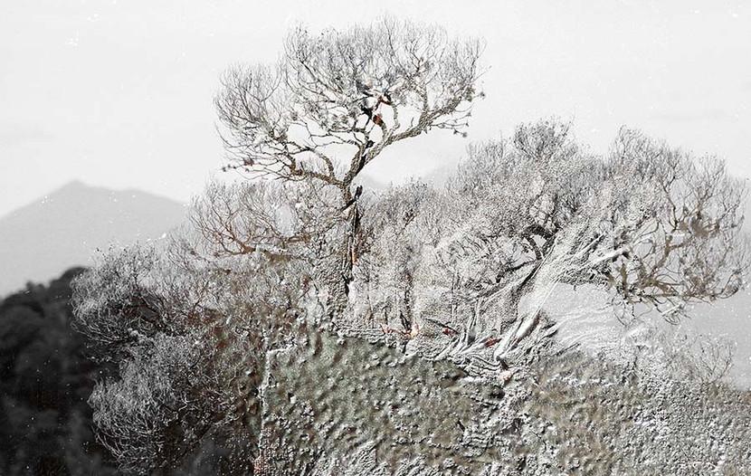 bomen4.jpg