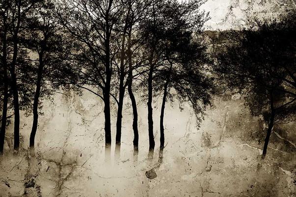 Landscapes Bomen.11a / © 2021 100x120 / 70x100 - 1/3+1  Zuidveen, Overijsel