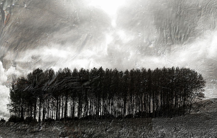 bomen1a.jpg