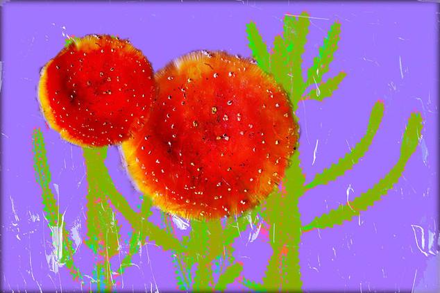Digital collages  215g/ @2020   Happy Cactus