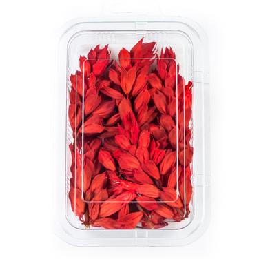 Salvia Red
