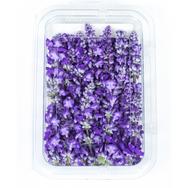 Salvia Blue