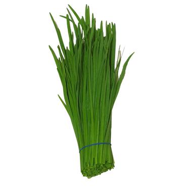 garlic chive