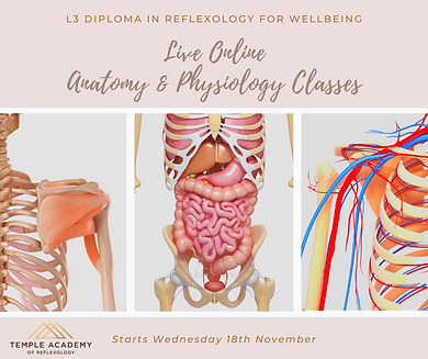 Anatomy, Physiology & Pathology Training