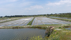 Marais salants 2