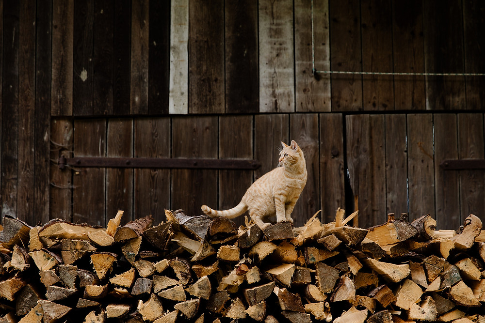 a ginger cat sitting on a pile of wood logs