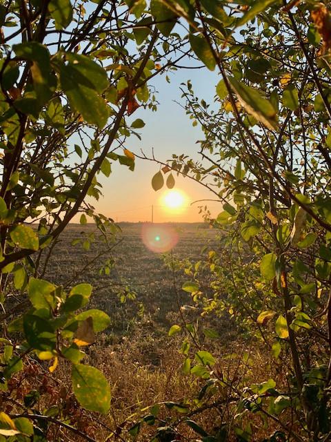 Goutoulas sunset