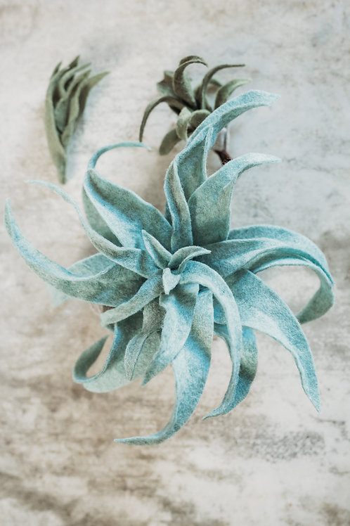 Make Your Own Airplants Downloadable/Printable Tutorial