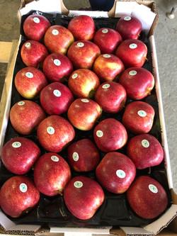 Apple4U - Jonagored Morrens's