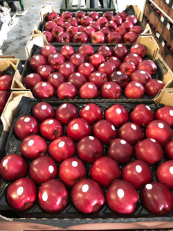 Apple4U - Gala Red Lum