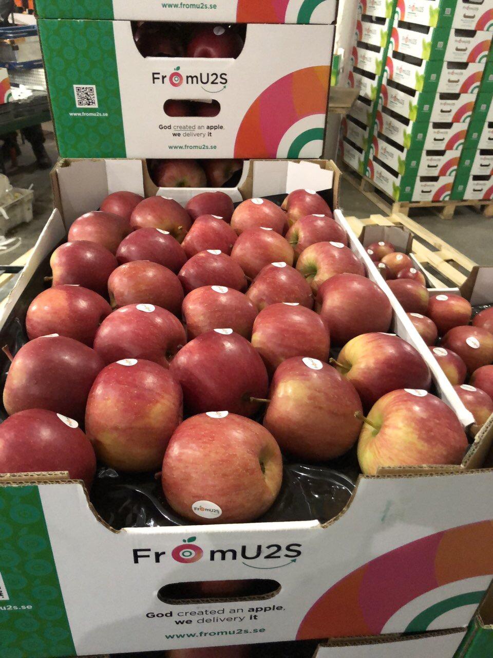 Apple4U Fuji Fubrax
