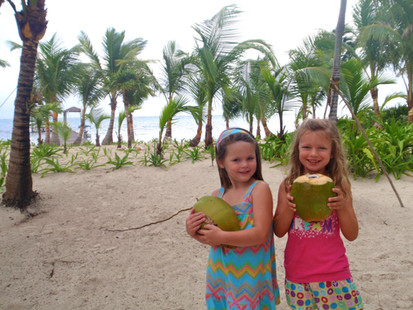 Fresh Coconut Water, palm tree to table!