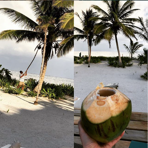 Palm Tree to Table, Fresh Coconut Water
