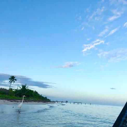 Birding from the ocean hammocks