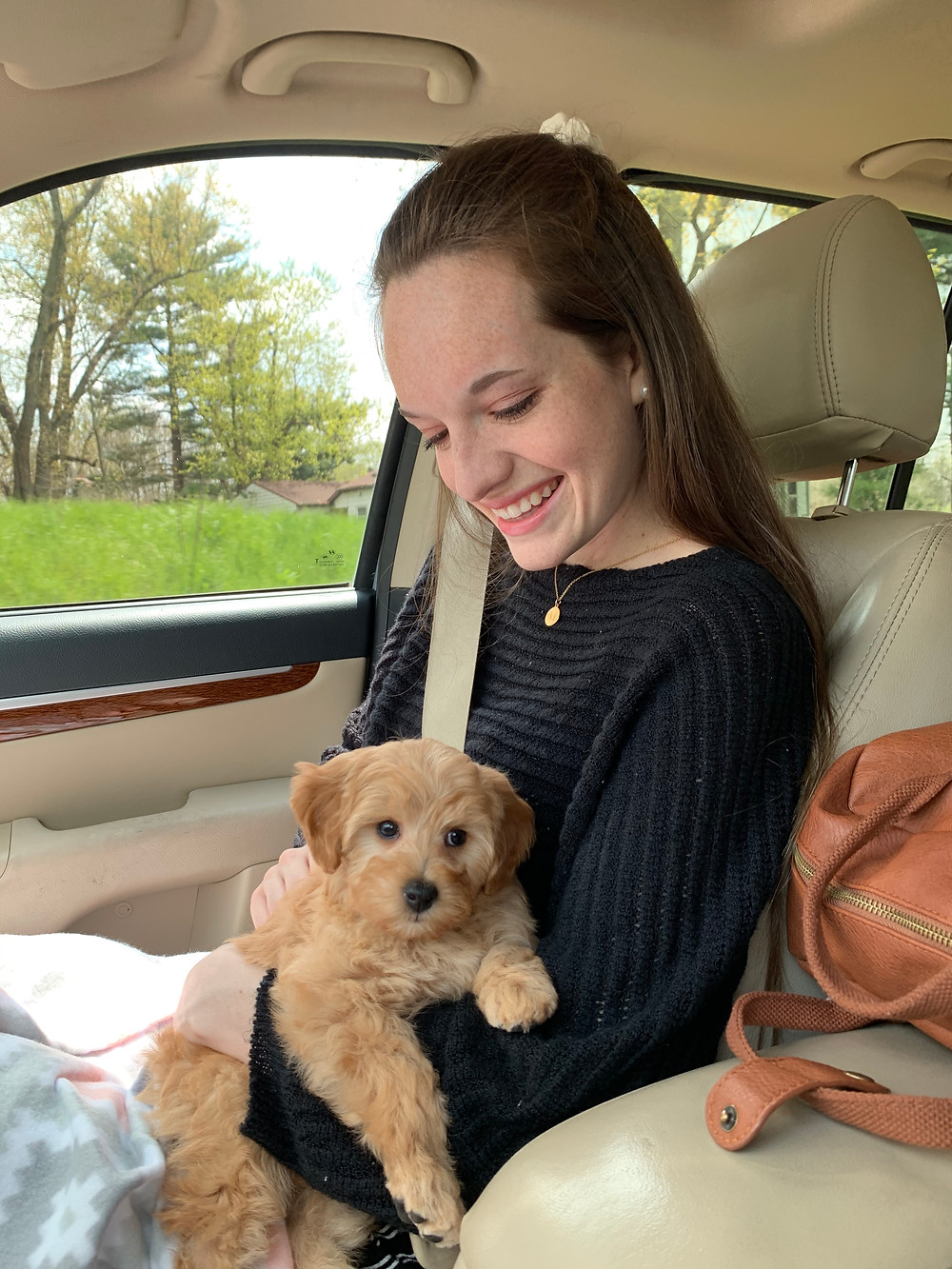 Holding our new mini golden doodle puppy as we drive home from the dog breeder in the car.