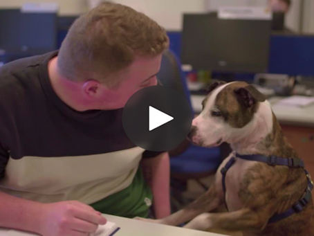 Matching homeless dogs to new owners, can be a daunting undertaking, but Battersea managed that.