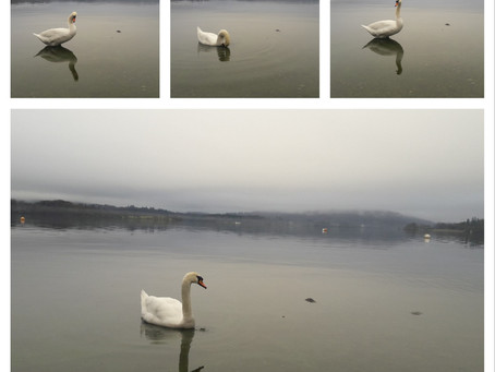 My Swan Lake (Windermere, UK)
