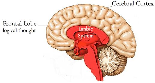 limbic-brain.png