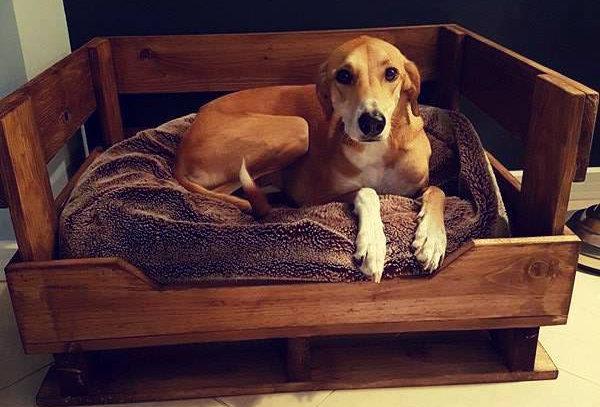 Dog Bed - 101