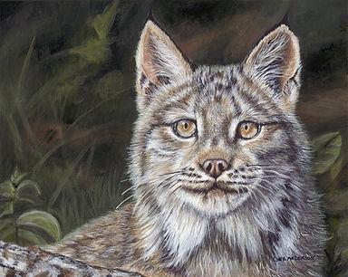 Missing Lynx.jpg