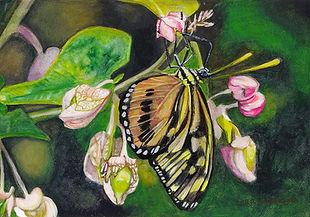 Monarch beauty-sonora.jpg