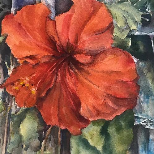 Small Glories: Hibiscus