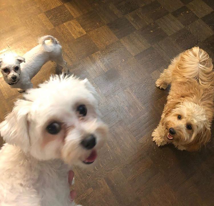 Kali, Bella & Koko