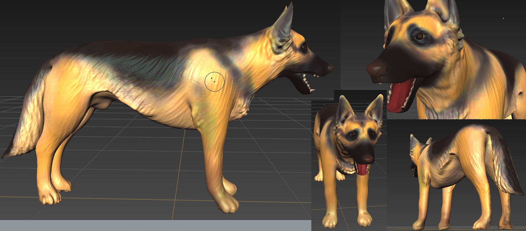 German Shepherd Model - Color