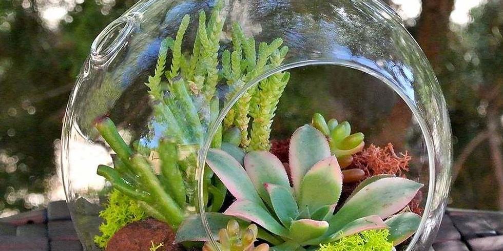 Terrarium Plant & Sip ~SOLD OUT~