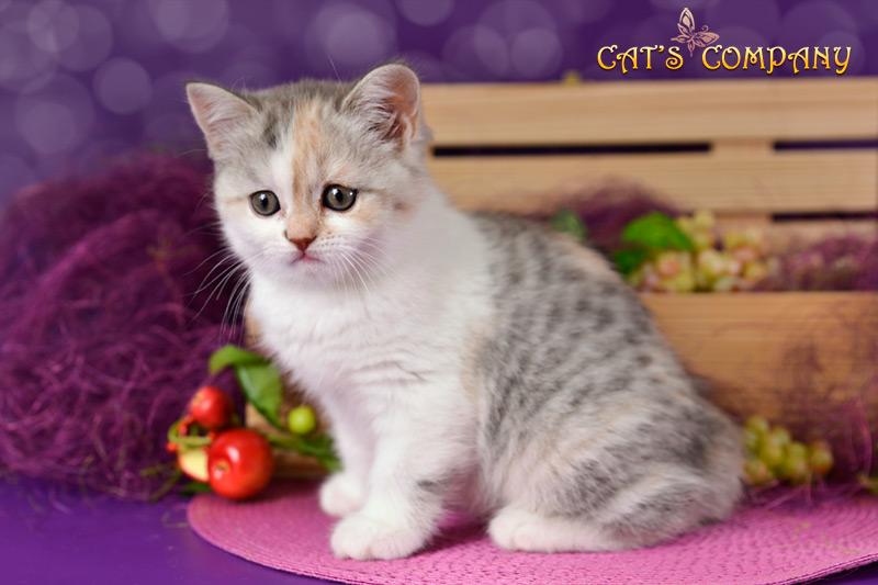 Оливия Шекспир Cat's Company