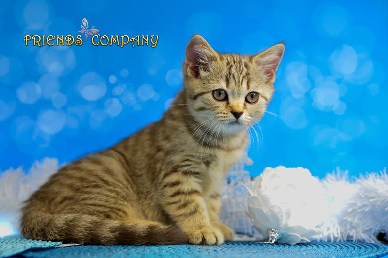 Черутти Шекспир Cat's Company