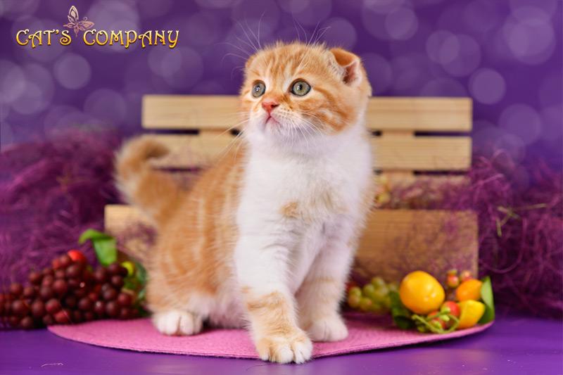 Оливер Шекспир Cat's Companyr-08