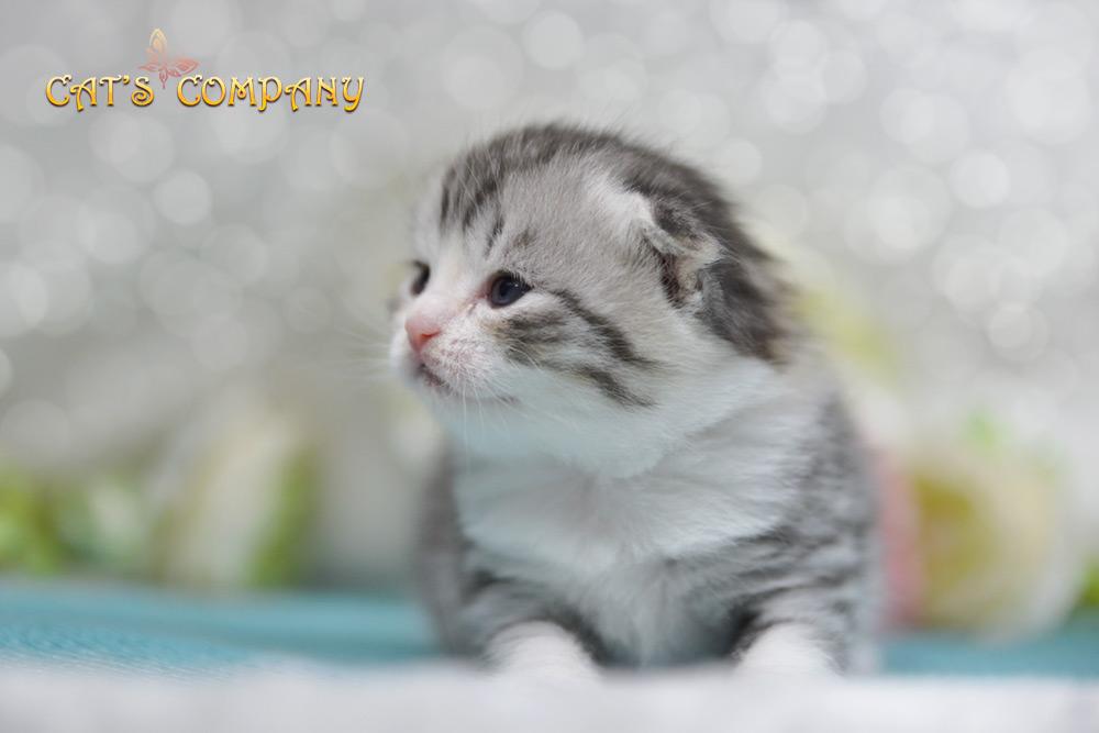 Комедия Шекспир Cat's Company