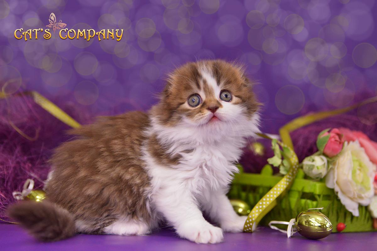 Лоренца Шекспир Cat's Company